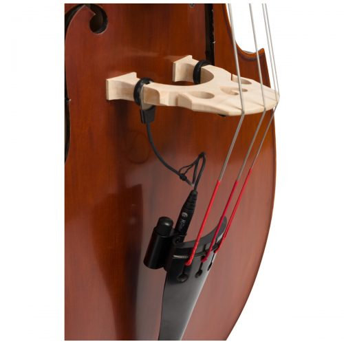 Close up view of Eastman VB105 double bass fitted with an adjustable bridge and Spirocore strings